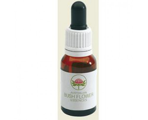 MINT BUSH 15ML GTT